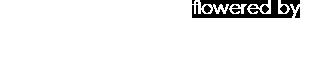 Falenopsis - Boechout